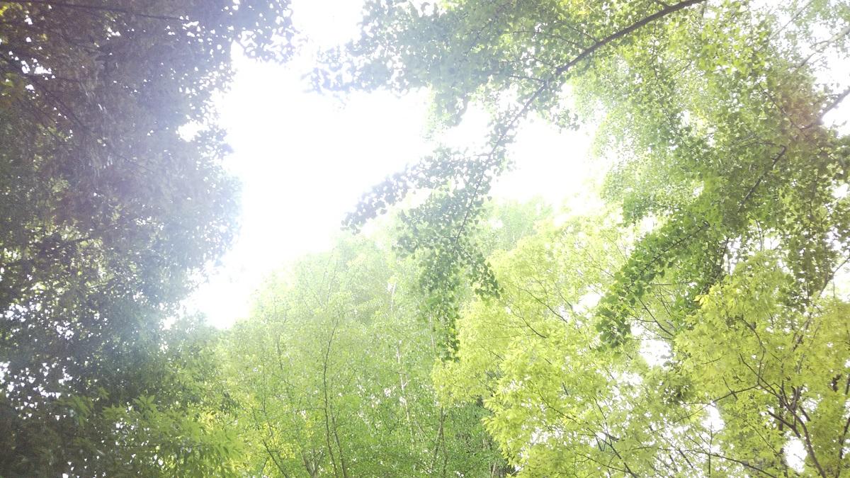 春日部,緑,新緑,木,葉