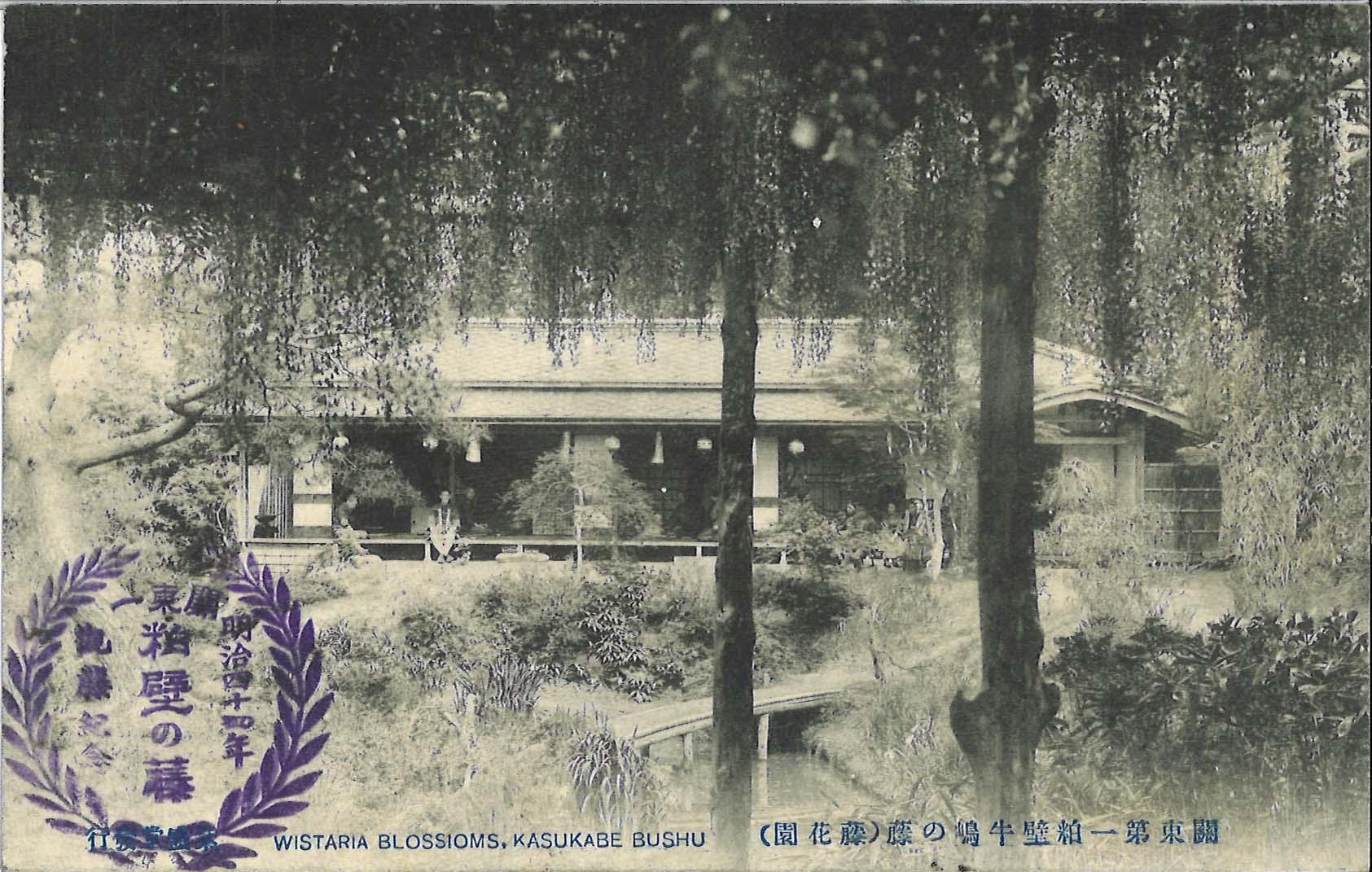 藤の牛島,kasukabe,藤,藤花園