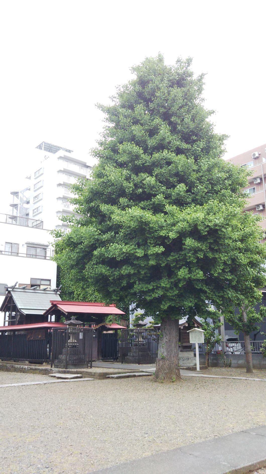 春日部市,神明社