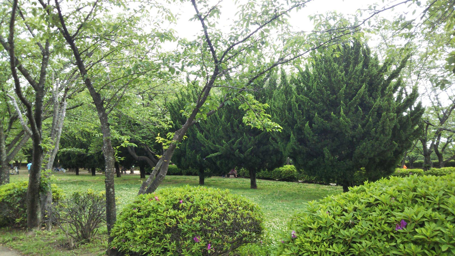 春日部市,kasukabe,park,一ノ割公園