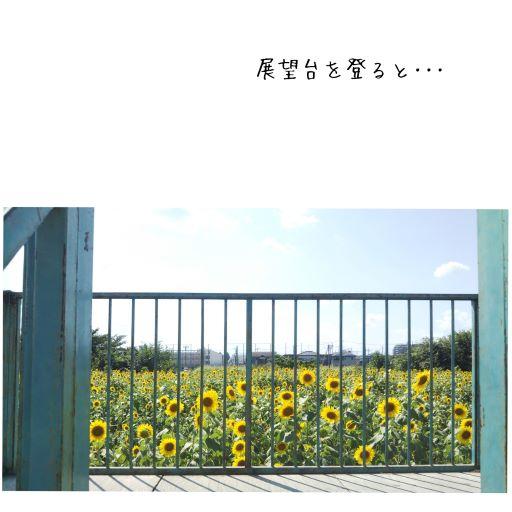 春日部市,ヒマワリ広場,ひまわり,牛島古川公園第2期
